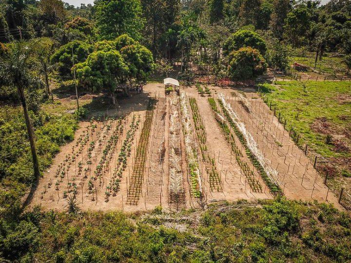 10 recomendações para a restauração florestal acelerar e ganhar escala na Amazônia